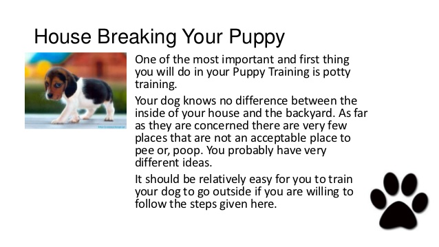 High Quality Dog Training School Brooklyn New York   How To House Break Or Potty Train  Your New Puppy
